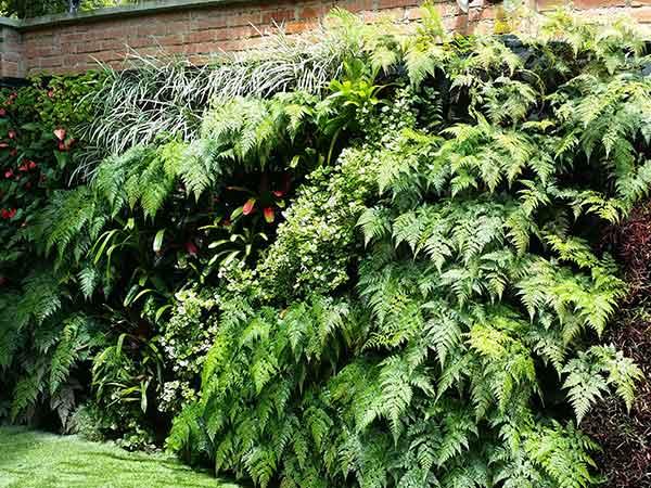 aleroarquitectura-paisajismo-jardin-casa-muro-vegetal-portafolio